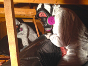 attic insulation removal