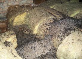 bat guano, bat droppings, bats in attic