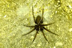 spider on floor