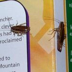 Roaches on Cereal Box