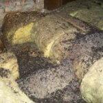 Bat Guano on Insulation