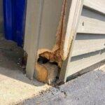 Squirrel Damage to Door (before)