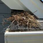 Bird Nest on Roof