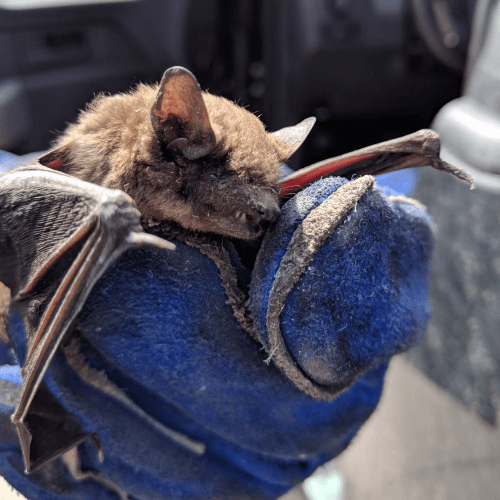 Holding a Bat
