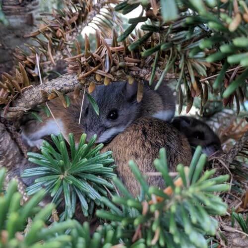 Mice in Tree