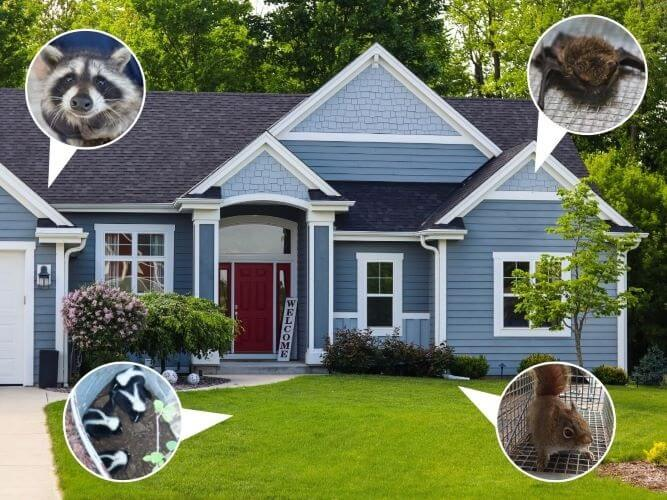 Protect Your House from Animals