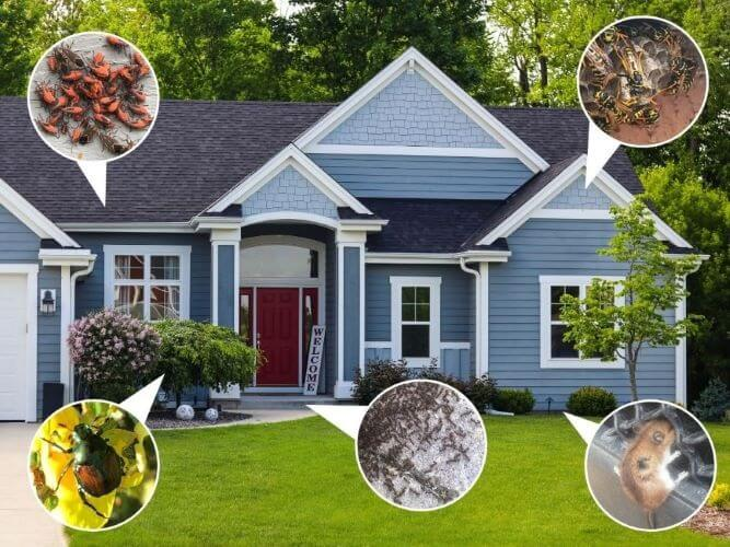 Protect Your House from Bugs